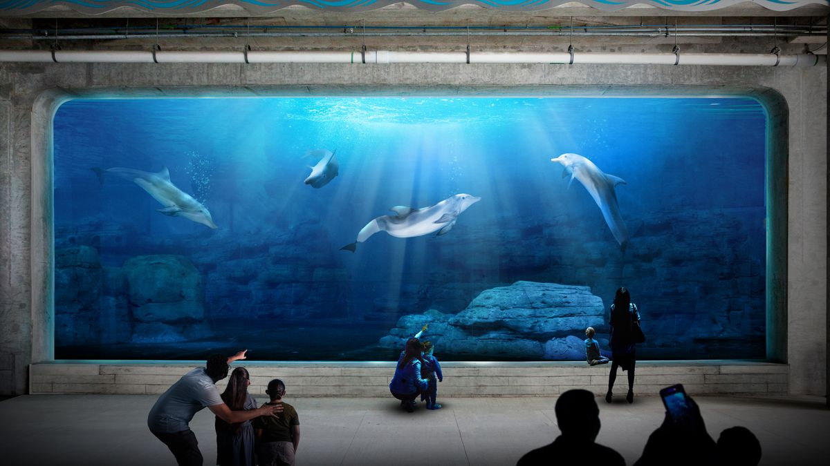 SEE: Clearwater aquarium unveils new dolphin habitat, viewing area and café as part of $80M expansion