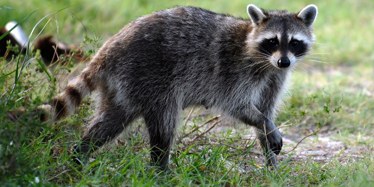 Health officials issue rabies alert for Seminole County