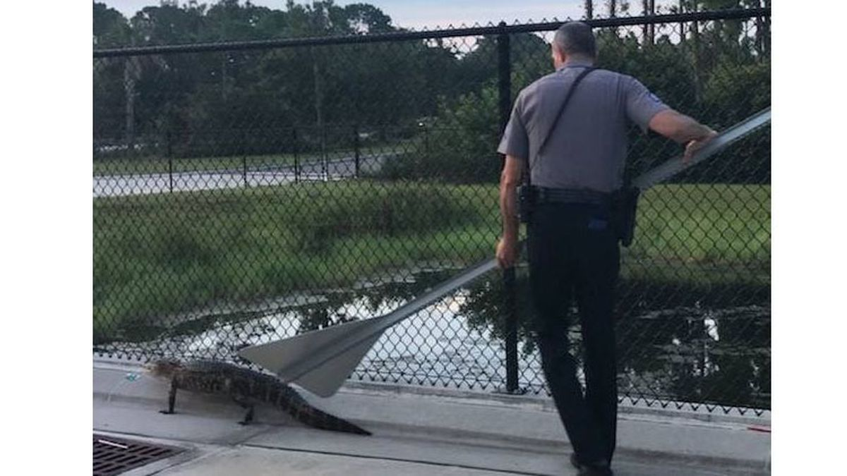 Daytona Beach police help alligator find way back to water