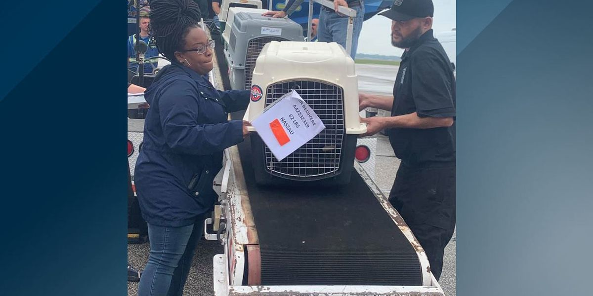 More than 70 Florida pets safely transported to Michigan ahead of Hurricane Dorian