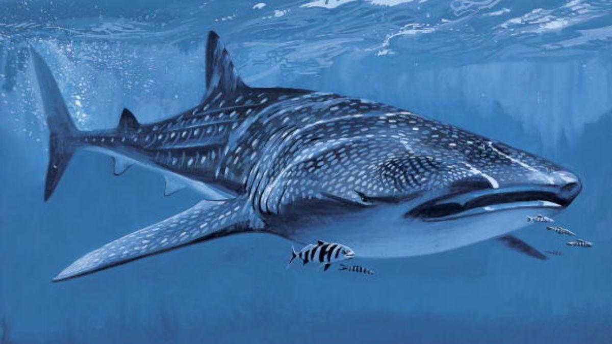Trixie, Georgia Aquarium's beloved female whale shark, dies