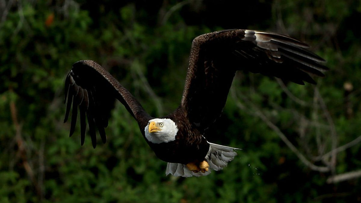Rare double eaglet hatch caught on camera