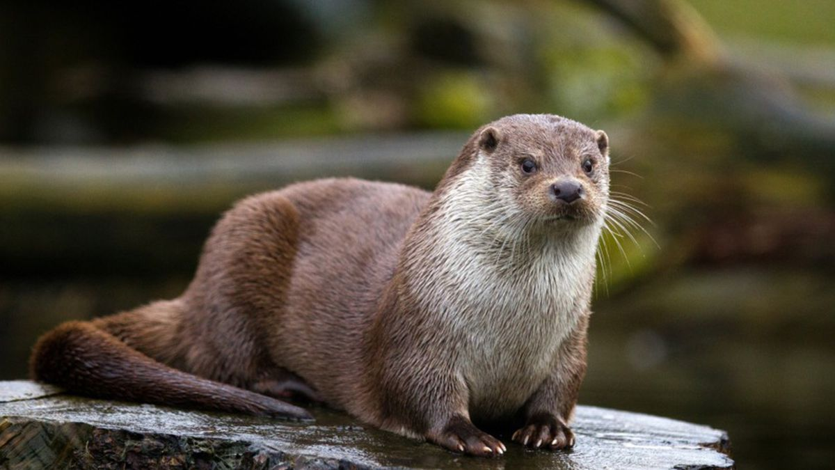 Health department issues alert after otter tests positive for rabies in Delaney Park