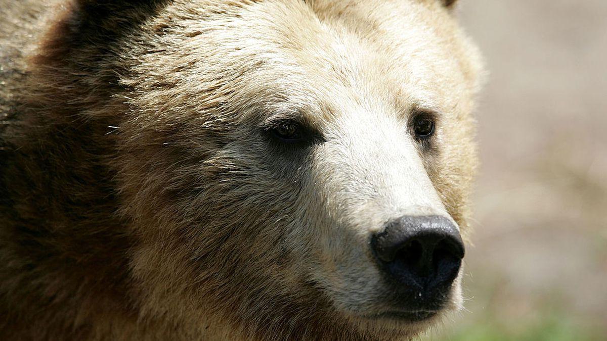 Watch grizzly bear take bubble bath at the Denver Zoo