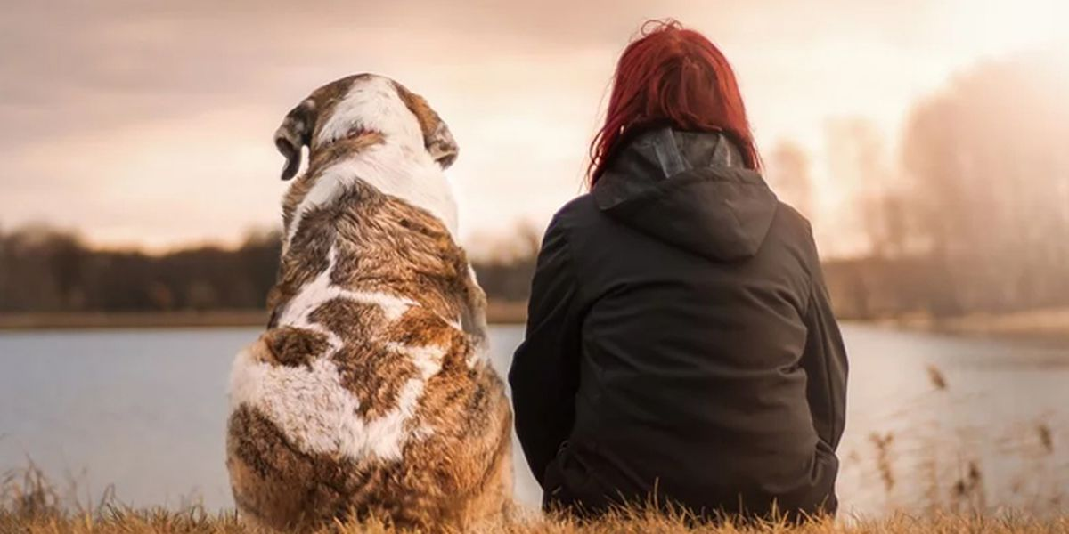 Losing a pet: Coping with grief when your beloved pet passes on