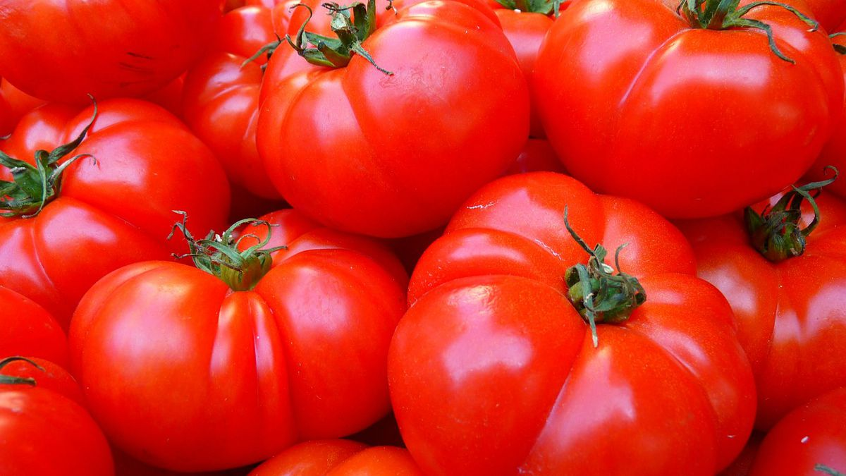 'This is a catastrophe': Coronavirus claims an unexpected victim: Florida vegetables