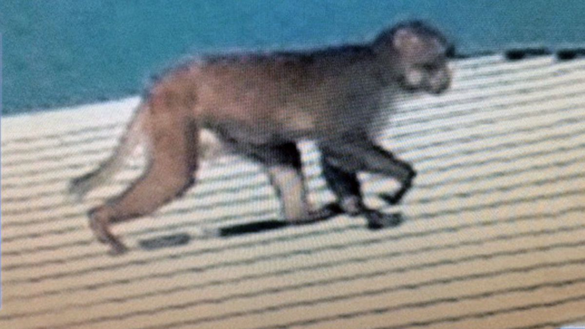 Monkey spotted at elementary school in Lady Lake