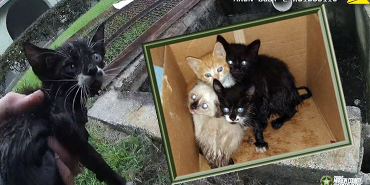 Watch: Kittens rescued from storm drain outside Marion County elementary school