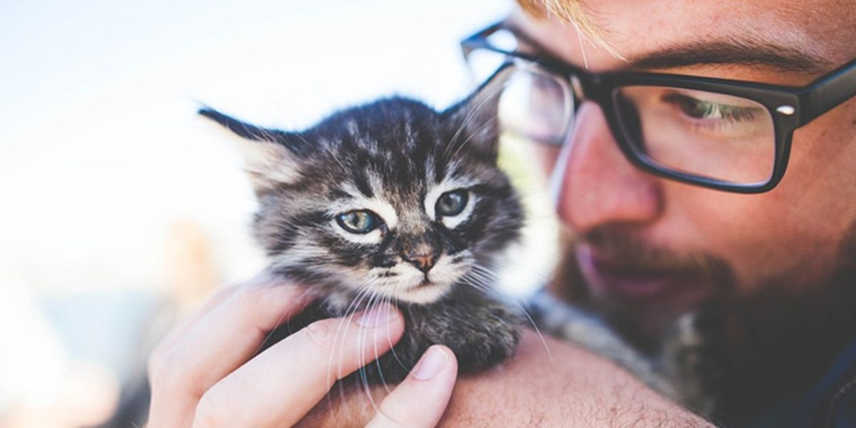 Pet insurance 411: What to consider when researching insurance providers