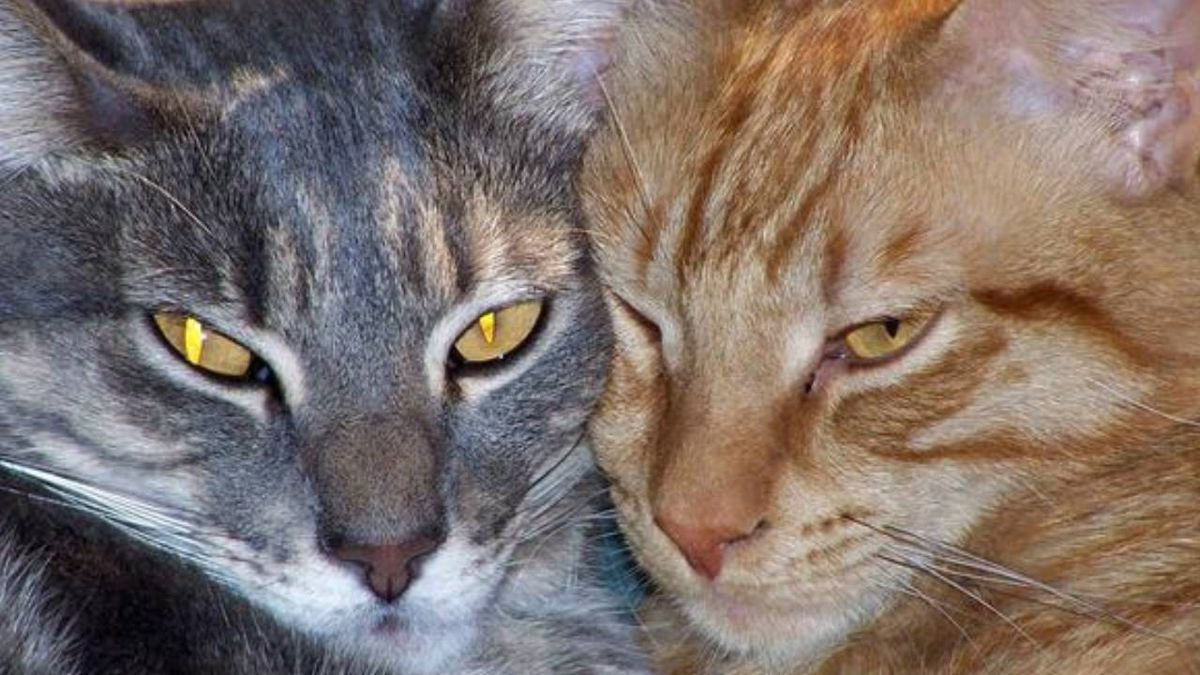 Feline farewell: London cathedral hosts memorial service for resident stray cat