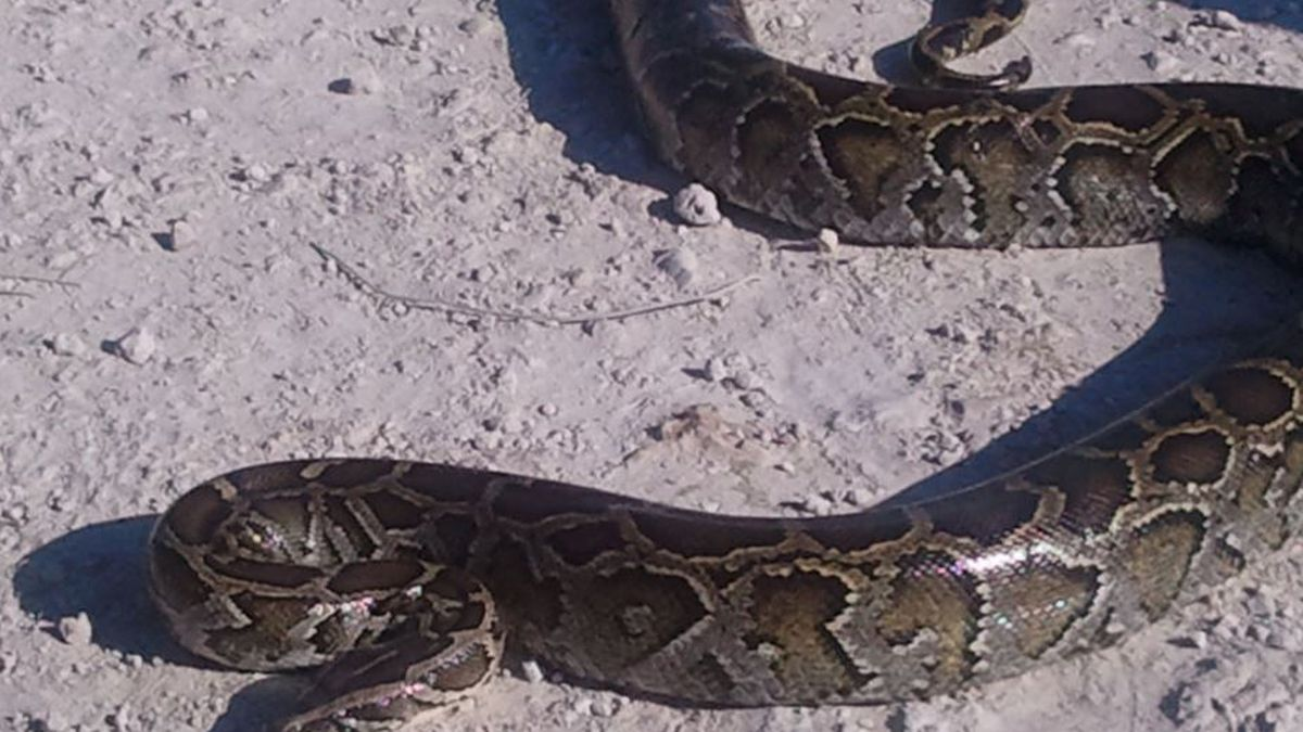 Oh, Florida: Crazy animal stories piling up this summer (and it's just getting started)