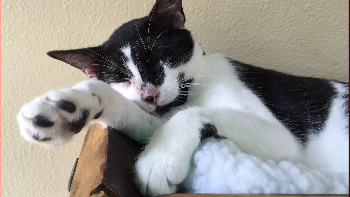 9 facts about the Orlando Cat Cafe and the animals that inspire it