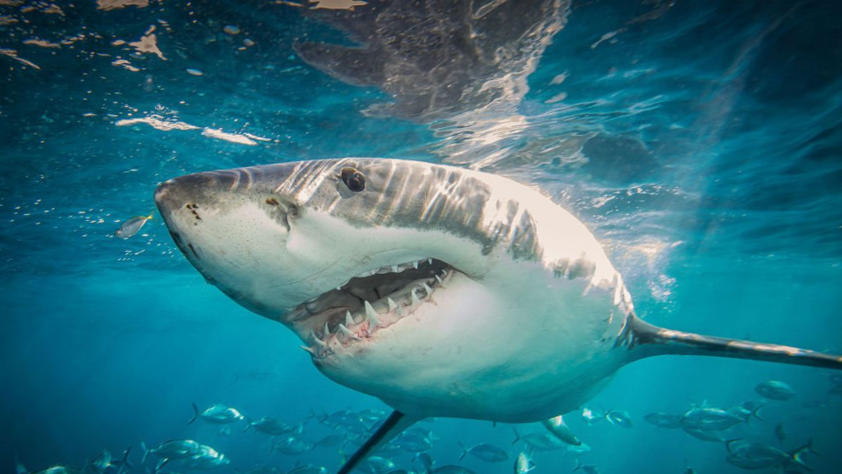Celebrate 'Shark Week' at SeaWorld with shark presentations, special offers
